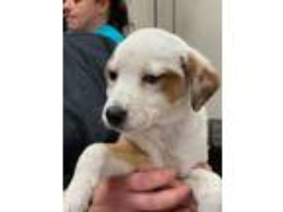 Adopt PIPPIN a Mixed Breed