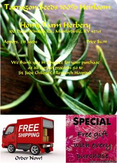 Tarragon (French) Heirloom Seeds, Order now, FREE shipping & a free gift