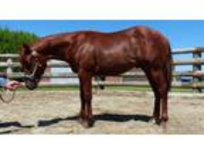 Reining cowhorse rope horse prospect Electric Code and Highbrow Cat