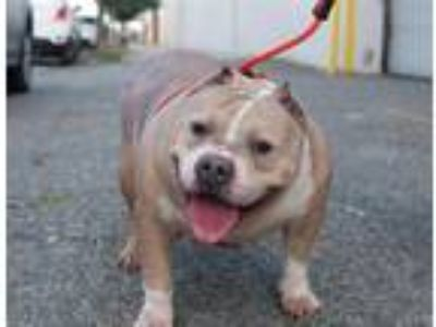 Adopt Harley a Mixed Breed (Medium) / Mixed dog in Brooklyn, NY (25652399)