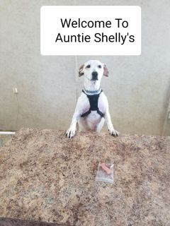 AUNTIE SHELLY'S PET GROOMING