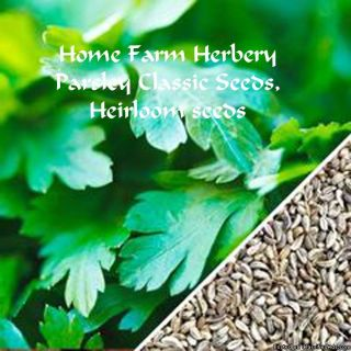 Order our best Parsley Seeds, Classic Heirloom seeds now & get a free gift