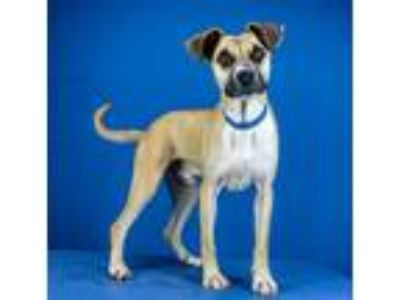 Adopt Vincent a Shepherd (Unknown Type) / Mixed dog in LAFAYETTE, LA (25177323)