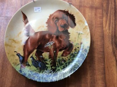 THE IRISH SETTER Collectible plate