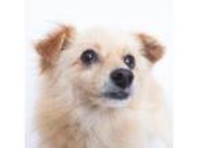 Adopt Castro a Terrier, Mixed Breed