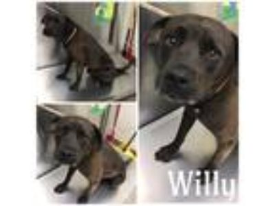 Adopt WILLY a Black - with White Mixed Breed (Medium) / Mixed dog in Macon