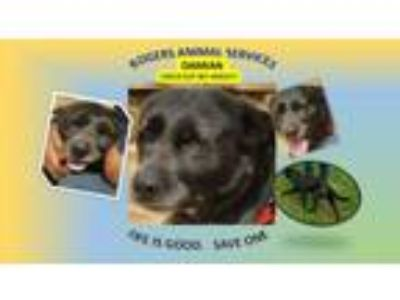 Adopt DAMIAN a Labrador Retriever, Mixed Breed