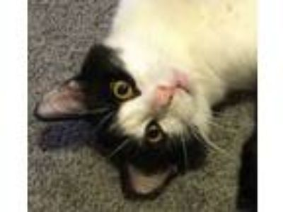 Adopt Penny - Will you rescue a cat who really needs rescuing? a Domestic Medium