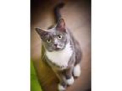 Adopt Flora and kittens a Domestic Short Hair