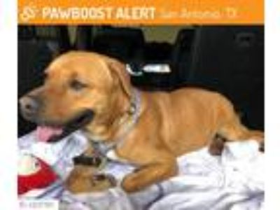 Adopt Buddy a Red/Golden/Orange/Chestnut Labrador Retriever / Black Mouth Cur /