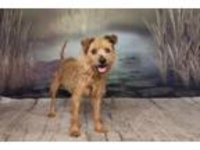 Adopt SCAMP a Terrier