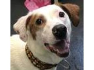 Adopt Baby 26056-d a White Mixed Breed (Medium) / Mixed dog in Ithaca
