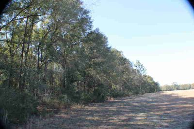 40 ACRES Griffith Mill Road Holt, Beautiful heavy wooded