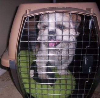 """Petmate"" Crate for Small to Medium Size Dogs or Cats"