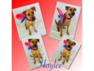 Adopt Haylee - Pawsitive Direction Program a German Shepherd Dog