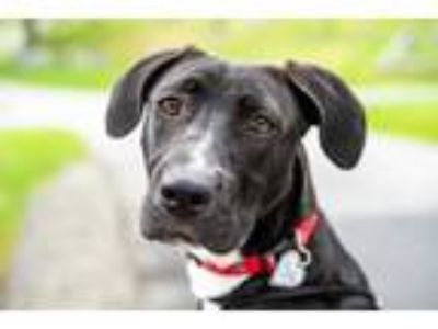 Adopt Neon~18/19-0740h a Black Retriever (Unknown Type) / Mixed dog in Bangor