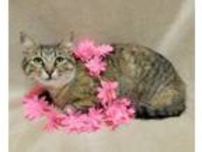 Adopt Camille a Domestic Short Hair