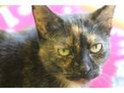 Adopt Celine a All Black Domestic Shorthair / Mixed cat in Independence