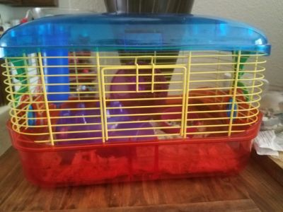 Hamster with cage
