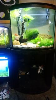 26 gallon bow front