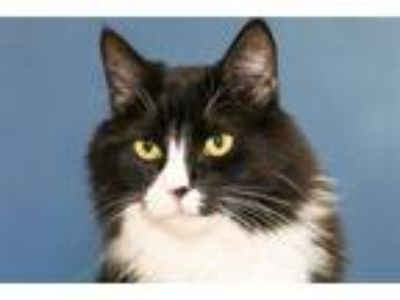 Adopt Mama a Domestic Longhair / Mixed cat in San Diego, CA (25680317)