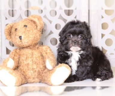 Puppy - Dogs for Adoption Classified Ads in Mt Vernon, Ohio