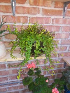 Creeping plant in a vase