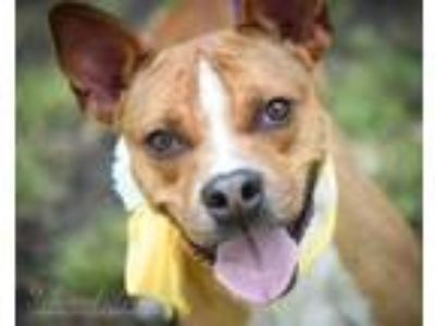 Adopt Missy a Terrier