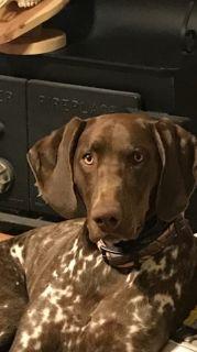 Craigslist Dogs For Or Adoption