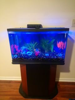 29 gallon glo fish aquarium with stand