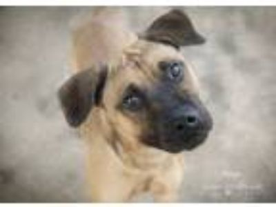 Adopt Dingo a Mixed Breed