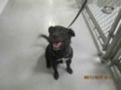Adopt JESSE a Mixed Breed