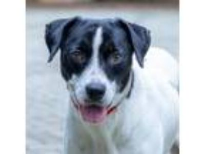 Adopt Star a Hound, Mixed Breed