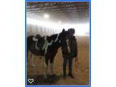Jumping pony for sale in Pennsylvania at a bargain