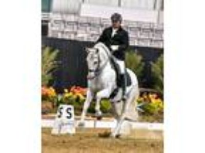 Spectacular National Champion Rare Opportunity