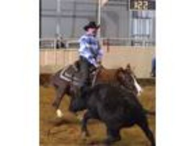 AJ Sundance PB Arabian National Champion Cow Horse and Cutting Horse