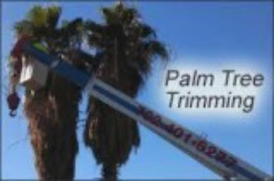 Palm Tree Service - Central Florida