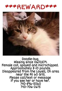 Lost Cat **REWARD**