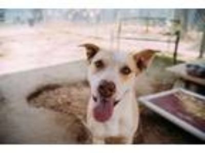 Adopt Mollie Jo a Mixed Breed