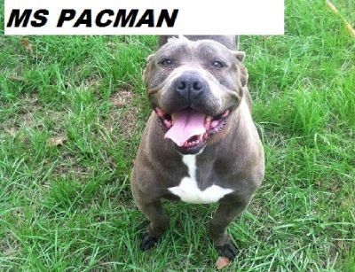 MS. PACMAN HAS TO FIND HER A NEW FAMILY DUE TO OWNER'S DECLING HEALTH ISSUES!!