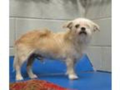 Adopt Berkley a Terrier