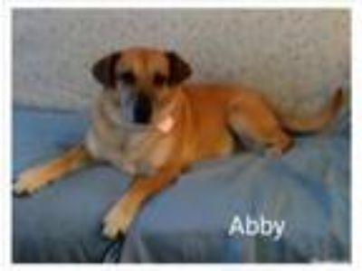 Adopt Abby a Labrador Retriever