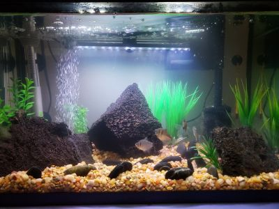 10 gallon tank with decor and accessories