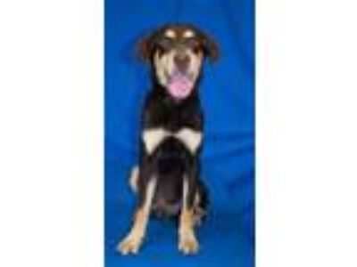 Adopt Rocko a Mixed Breed