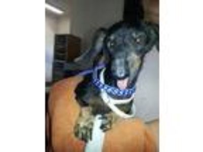 Adopt Ethel H3 a Black Mixed Breed (Small) / Mixed dog in Georgetown