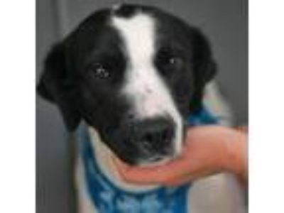Adopt Luna a Border Collie / Mixed dog in Rancho Santa Fe, CA (25370183)