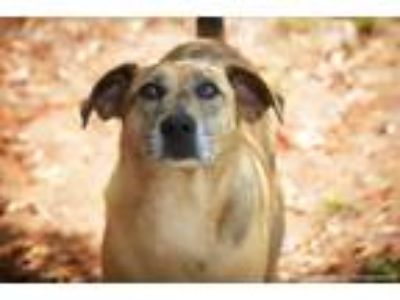 Adopt Copperpot a Brindle Catahoula Leopard Dog dog in Barnesville