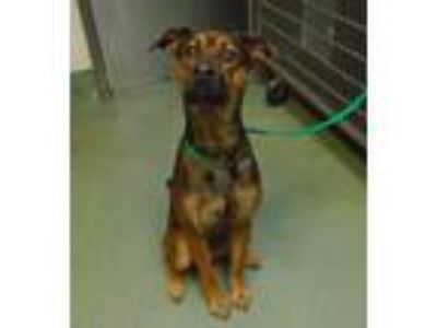 Adopt Willow a Terrier (Unknown Type, Medium) / Mixed dog in Raleigh
