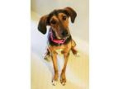 Adopt DORIS a Black - with Tan, Yellow or Fawn Hound (Unknown Type) / Mixed dog