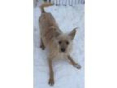 Adopt Willy a Terrier